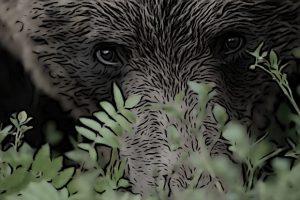 Kleine Bären Wars bär bruderwolf