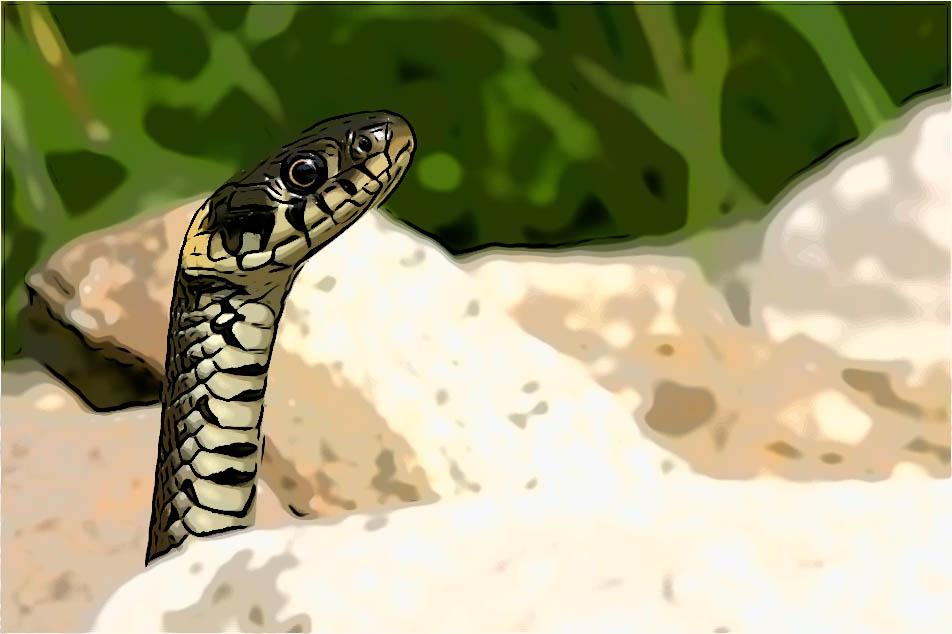 Der Mann und die Schlange