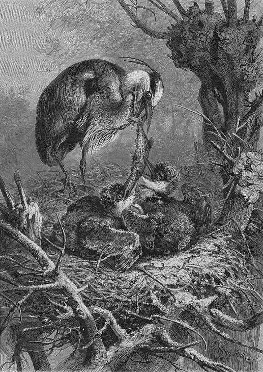 Das Gericht der Vögel